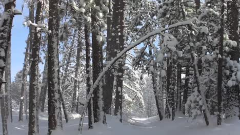 Snowy-Path-in-the-Trees