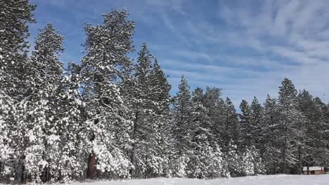 Snowy-Tree-Line-with-Cabin