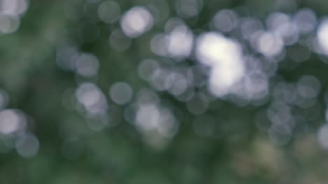 Abstract-Bokeh-Trees-UHD