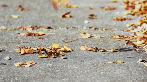 Autumn-Leaves-5