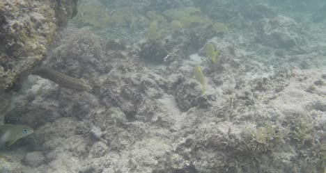 Snorkelling-in-Guadeloupe-01