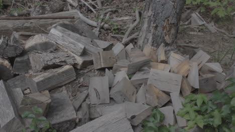 Wood-Debris-on-Pile