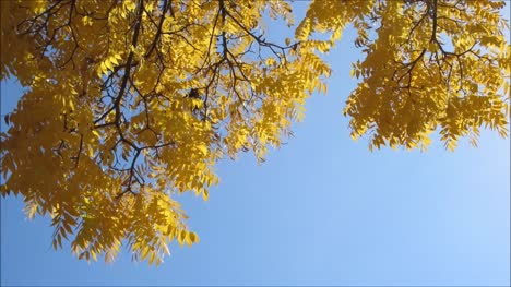Yellow-Tree-Leaves