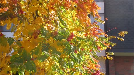 Autumn-Leaves-Against-an-Old-Building