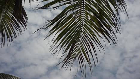Palm-Tree-in-the-Wind