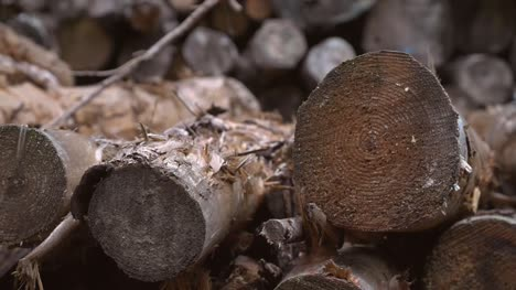 Woodpile-Close-Shot-Handheld