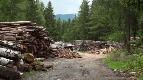 Woodpile-Wide-Shot
