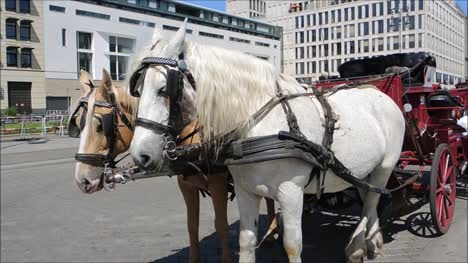Horses-in-front-of-Carriage