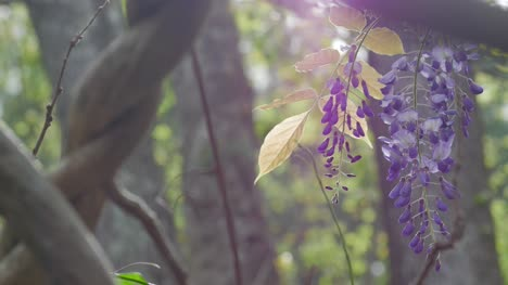 Purple-Flower-4K