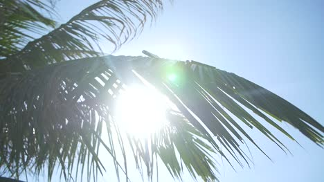 Lens-Flare-Through-Palm-Leaves-2