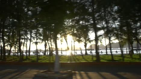 Lens-Flare-Through-Trees-Ha-Long-Bay