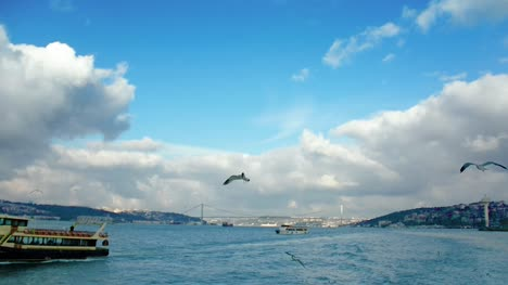Seagulls-in-Bosphorus