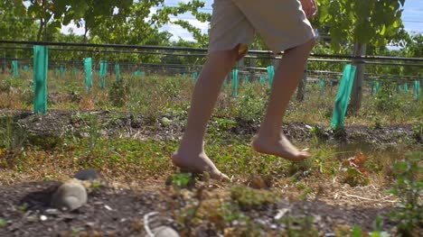 Young-Boy-Walking-Barefoot-Through-Vineyard