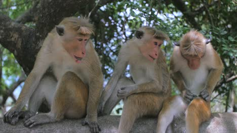 Monkeys-Sat-on-Wall