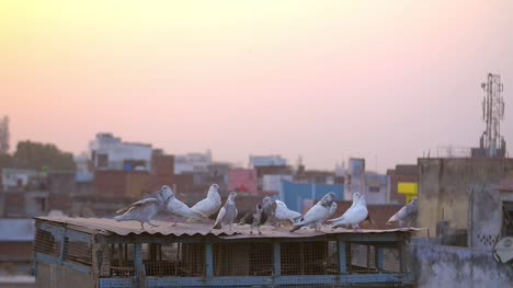 Birds-on-Rooftop-at-Sunset