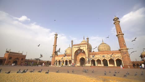 Flock-of-Pigeons-in-Front-of-Jama-Masjid