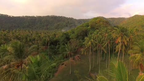 Flying-Over-Palm-Trees-Indonesia