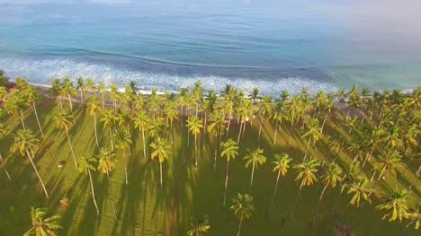 Flying-Over-Ocean-to-Reveal-Palm-Trees