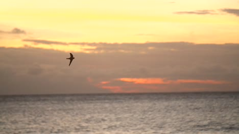 Bird-Flying-Over-Ocean-at-Sunset
