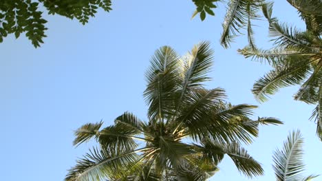 Looking-Up-at-Palm-Trees-and-Other-Leaves