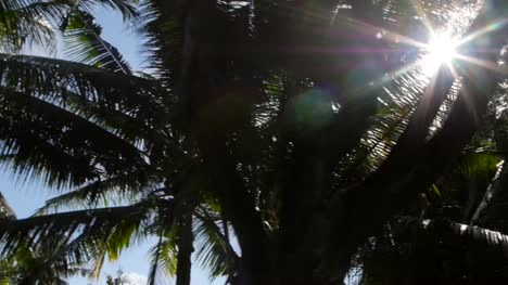 Sun-Shining-Through-Palm-Branches