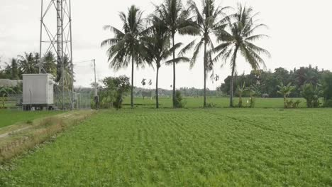 Indonesian-Rice-Paddy-with-Pylon