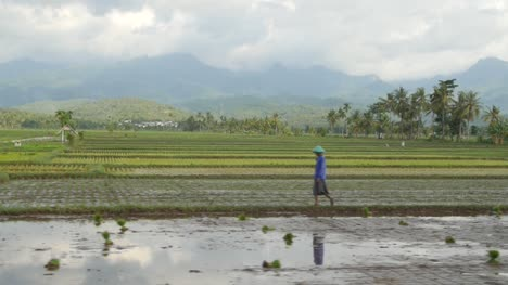 Man-Walking-in-Indonesian-Farming-Landscape