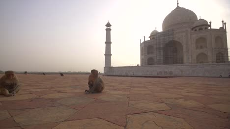 Mother-and-Infant-Monkeys-by-the-Taj-Mahal