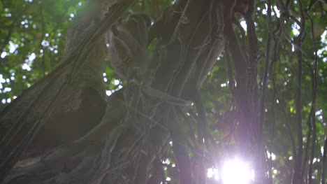 Close-Up-of-A-Monkey-Eating-in-a-Tree-