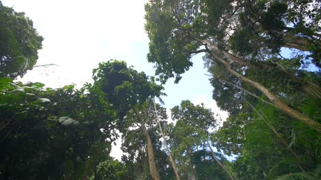 Rotating-Shot-of-a-Jungle-Canopy
