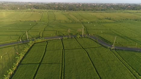 Aerial-Shot-of-a-Moped-in-Indonesian-Farmland