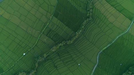 Rotating-Aerial-Shot-of-Indonesian-Fields