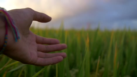 Trailing-Hand-Through-Grass-at-Dusk