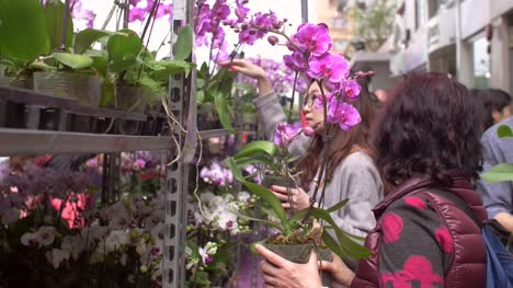 People-Choosing-Orchids-at-a-Flower-Market