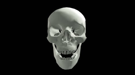 White-Skull-with-Jaw-Motion-with-Transparency