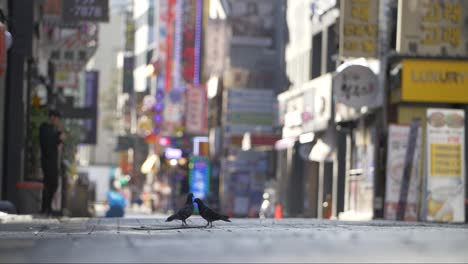 Pigeons-on-a-Seoul-Shopping-Street