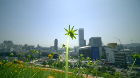Tracking-Through-Daisies-Outside-Seoul