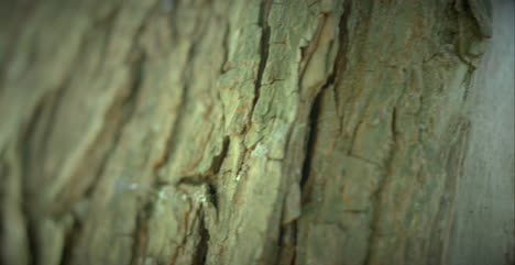 Macro-Shot-of-Bark