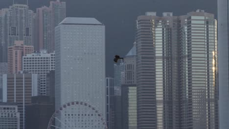 Eagle-Flying-in-Hong-Kong