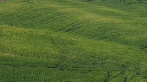 View-of-Green-Fields-at-Dusk