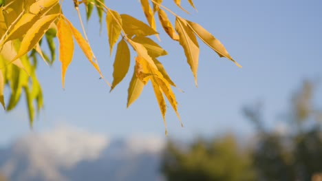 Yellow-Leaves-Against-Blue-Sky
