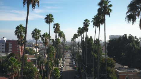 Palm-Tree-Lining-Street-in-Hollywood