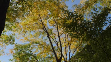 Yellow-and-Green-Leaves-in-Sunlight