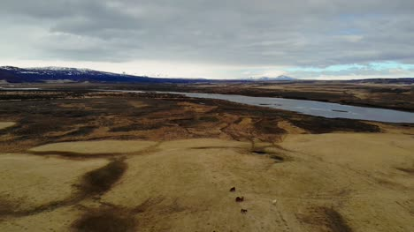 Aerial-View-of-Wild-Horses-by-a-River