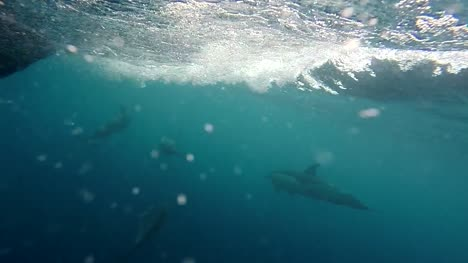 Pod-of-Dolphins-Swimming-Alongside-Boat