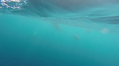 Dolphin-Pod-in-Slow-Motion