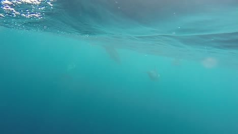 Dolphin-Pod-in-Slow-Motion-