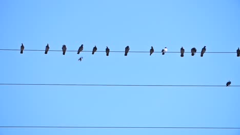 Bird-Landing-on-a-Wire