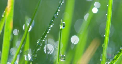 Grass-Blades-and-Dew-Drops-01