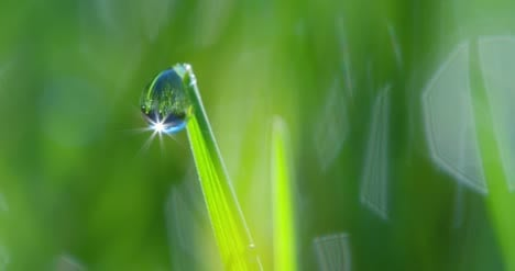 Dew-Drop-Macro-Shot-01